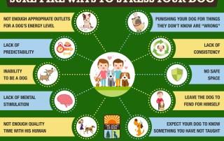 ways to stress your dog