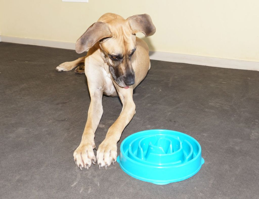 get a slow feeder bowl now to minimize risk of bloat