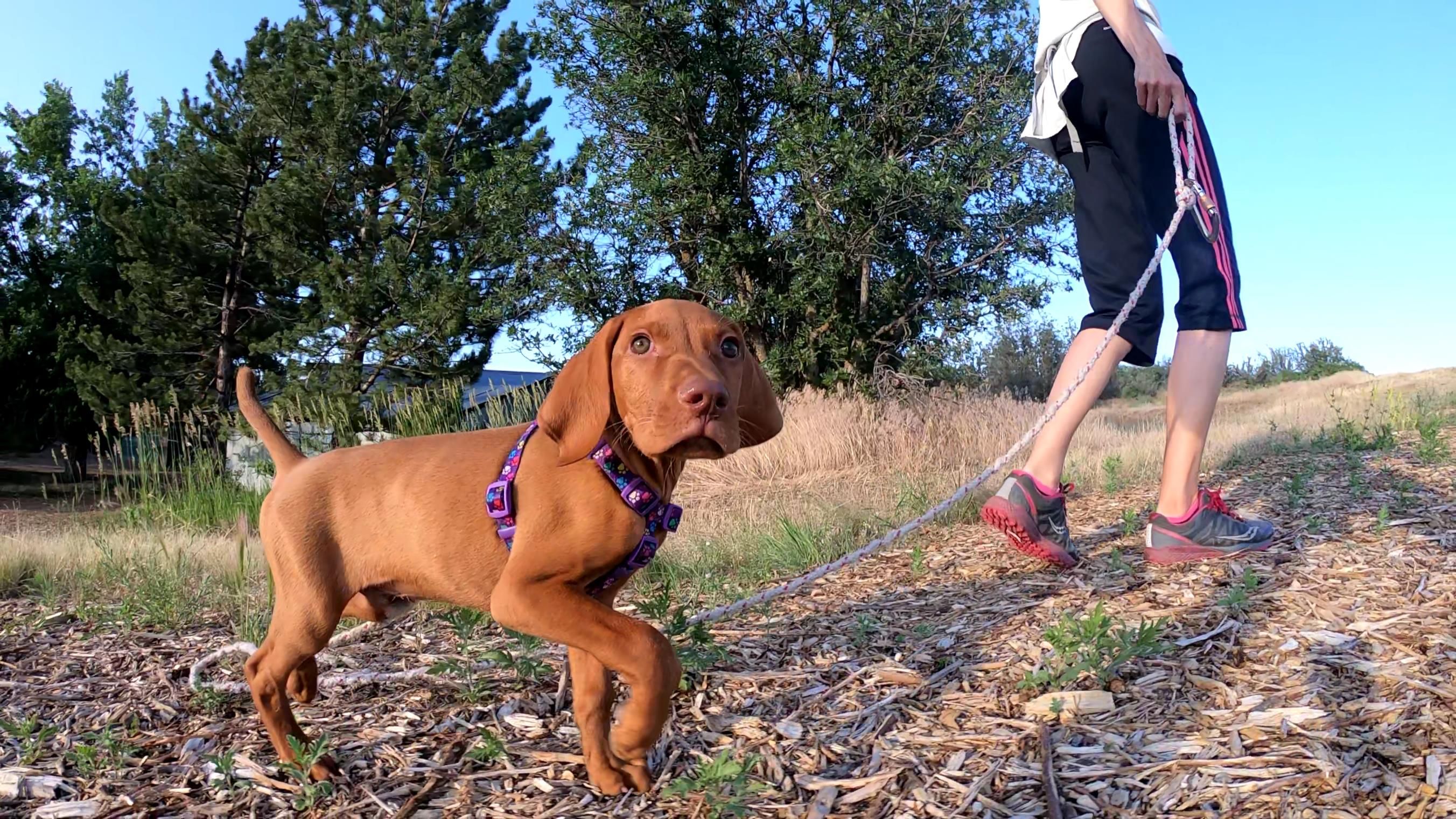 Does your puppy seem to eat everything – grass, dirt, sticks, rocks