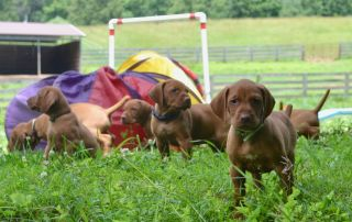 Male or female? Does it matter when bringing home a new puppy or dog
