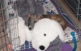 puppy sleep through the night
