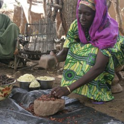 Shea_nut_processing_in_Burkina_Faso