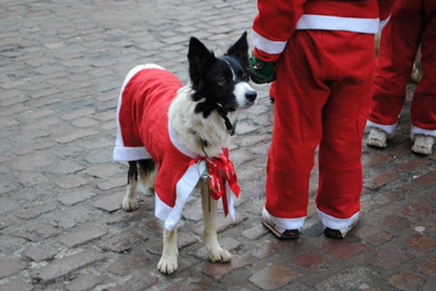 The Santa Doggy Dash is running for the first year, in association with Jerry Green Dogs.