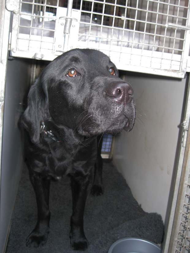 The products were detected by the multi-agency team, with help from Ozzie, a tobacco detection dog and its handler.