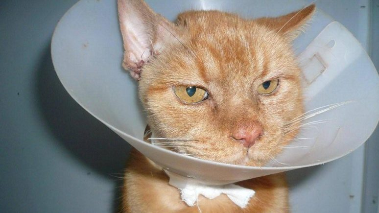 Lincoln Cat Care helps cats like Tucker, who has now fully recovered after he was thrown out of a car. The charity is now looking for a new loving home for Tucker.
