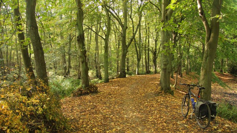 Hartsholme Park in Lincoln. Photo: Richard Croft