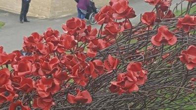Photo: Kerry Flower