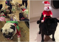 Will you be attending this year's pug party?