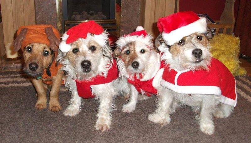 Ted, Podg, Badger and Molly. Photo: Karen Brader-Snell
