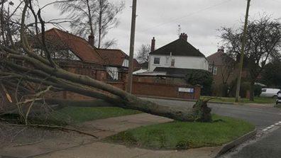 A tree has fallen on Hykeham Road. Photo: Anita Moore