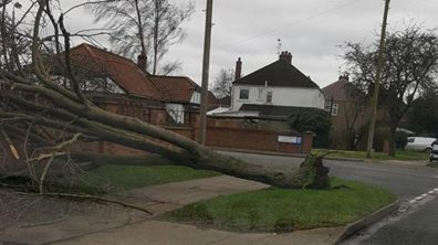 A tree has fallen on Hykeham Road. Photo: Anita Moore