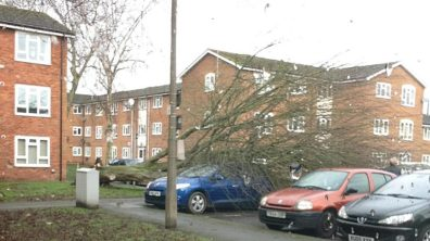 A tree has fallen on Gaunt Street, damaging a car. Photo: Helen Cotter