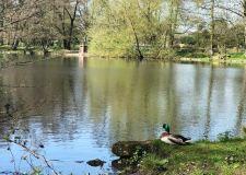 Boultham Park lake restoration a step closer