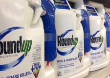 Council uses weedkiller linked to cancer