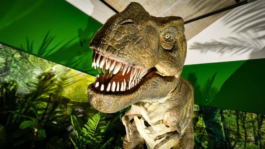 Sneak peek inside Dinosaur Encounter exhibition in Lincoln