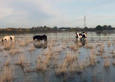 Hundreds of rescue animals at risk after 'extreme' flooding