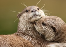 Watch Otter-ly adorable trio play together in Lincoln