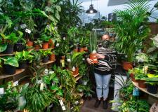 High Street florist opens new houseplant room