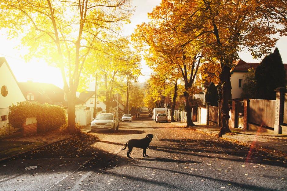 Meet the Neighbors: The Top 5 Portland Neighborhoods to Live In