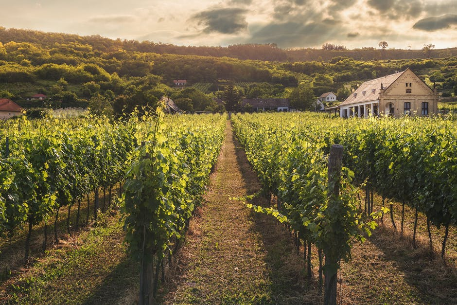 Best Wine Country Real Estate Locations for Living in the Pacific Northwest