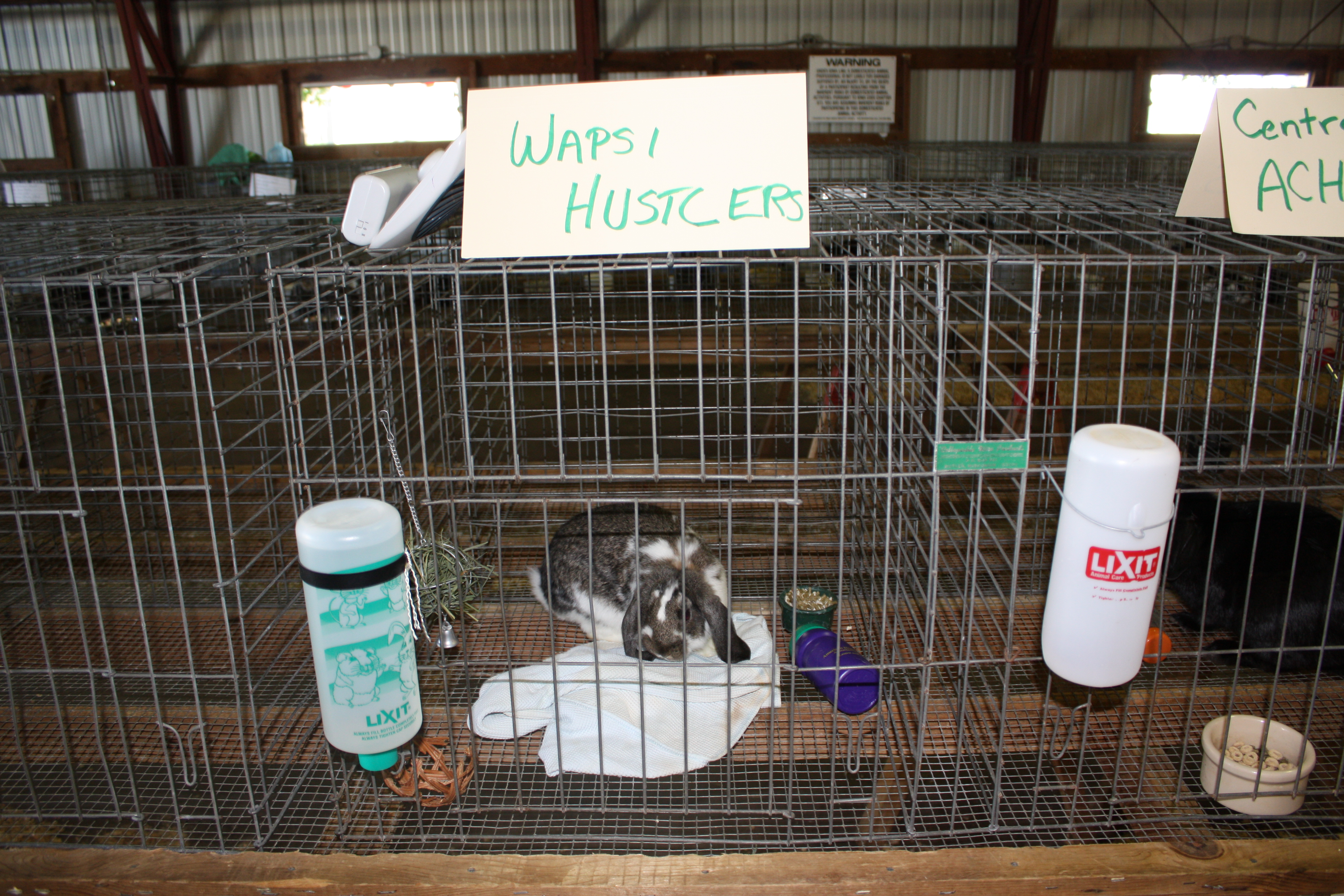 4 H Ffa Rabbit Cavy Winners Announced