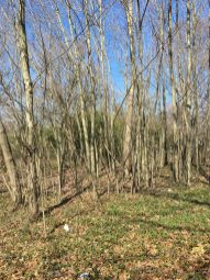 woods 3