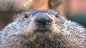 Punxsutawney Phil fears for his life, say he'll am-scray!