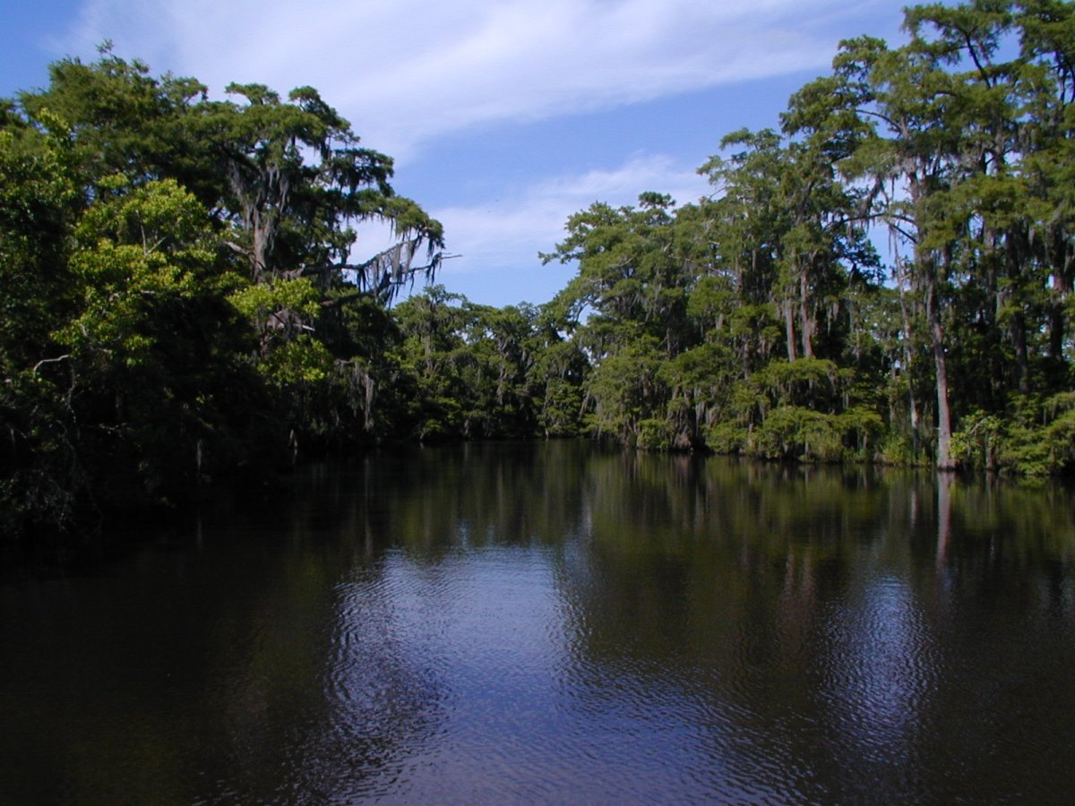 Old and Lost Rivers: A Soundscape of Texas Bayou Country