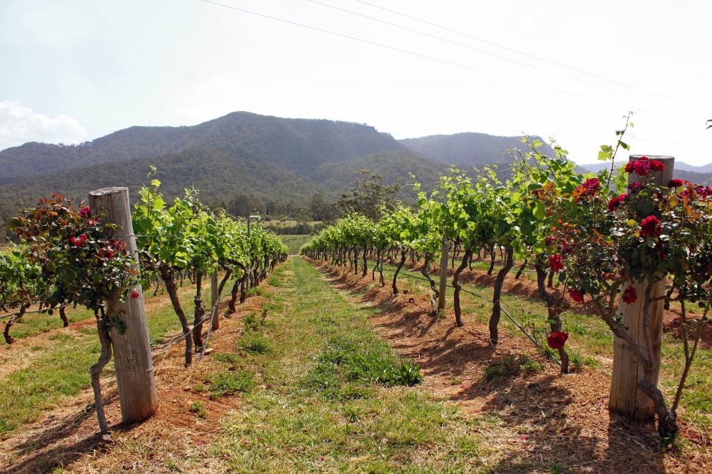 East Coast Australia Hunter Valley