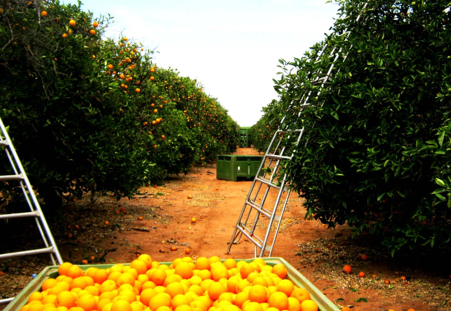 Top tips for fruit picking in Australia