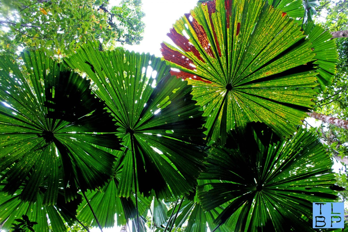 Photo Series – Up In The Daintree