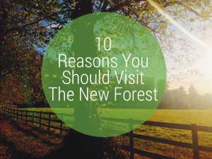 10 reasons you should visit the new forest