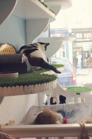 lady dinah's cat cafe