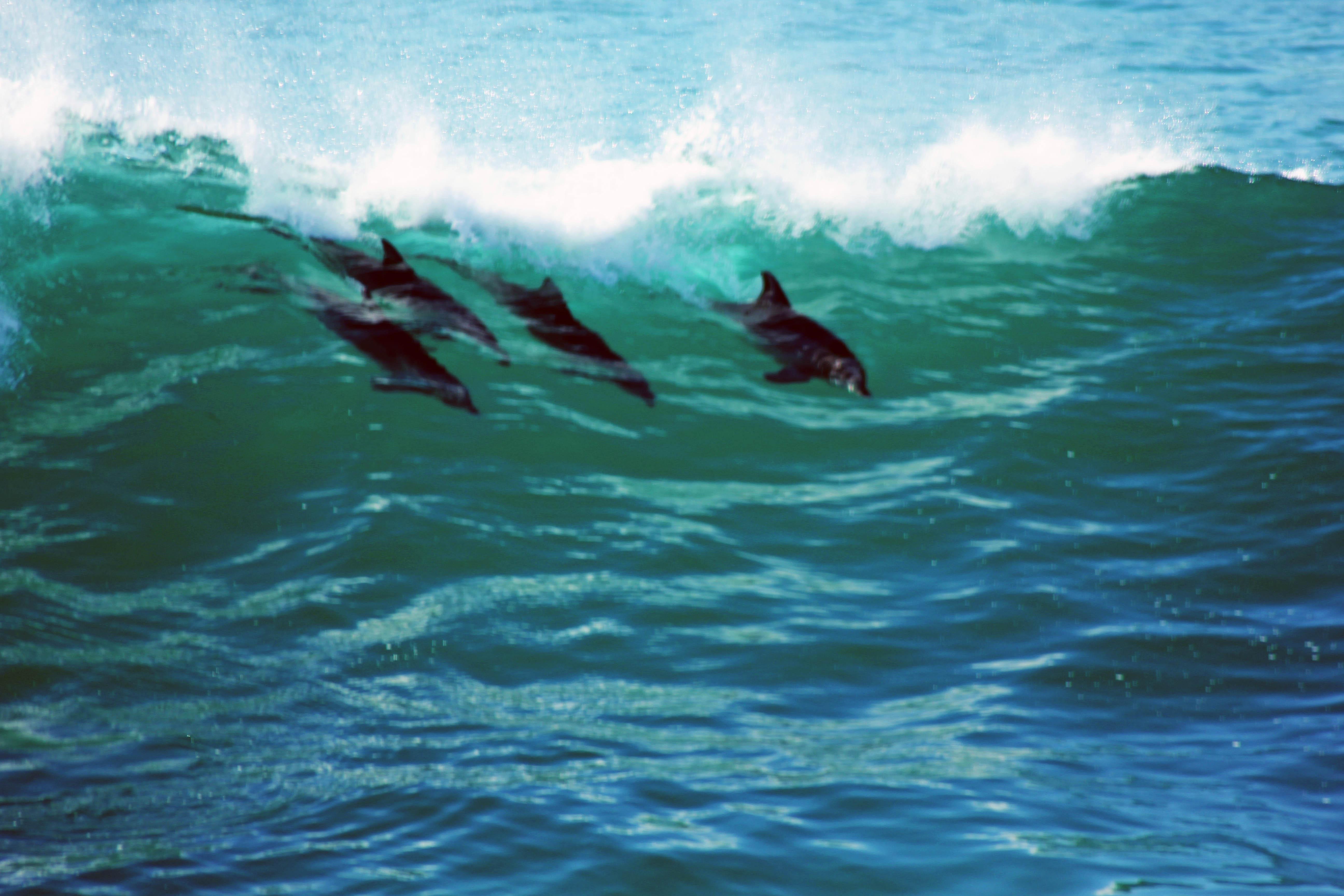 flitwick dolphins open meet 2012
