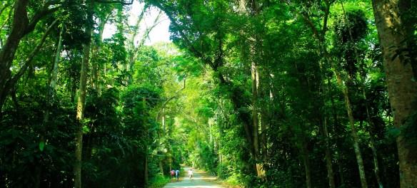 Mt Makiling trail