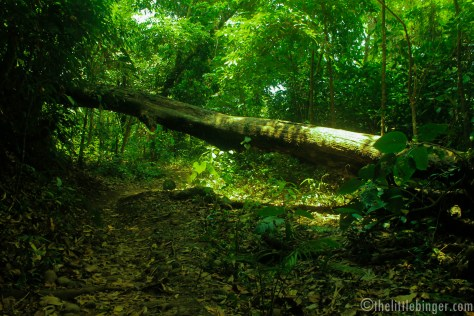 A fallen tree on the way to the top