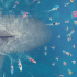 The Meg Chomps on the Crazies   Credit: Warner Bros Pictures