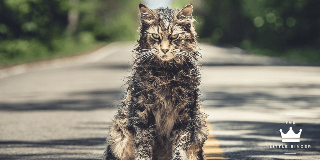 Beware of Church the Cat in Pet Sematary | The Little Binger | Credit: United International Pictures