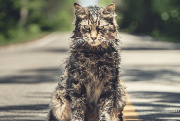 Beware of Church the Cat in Pet Sematary   The Little Binger   Credit: United International Pictures