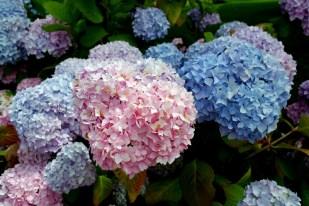 Fairmont Empress gardens