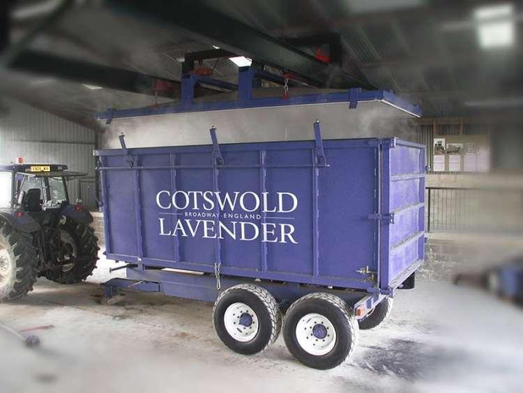 Cotswold Lavender Harvest
