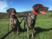 Double Dog Dash (October)