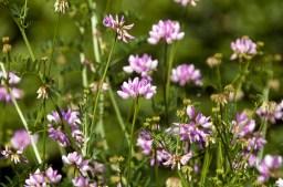627 Purple Flowers