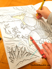 Colouring Books Indoor Activities for Toddlers