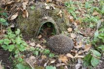 Man-made Hedgehog home