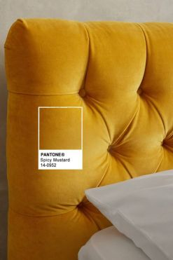 spycy-mustard-pantone-fall-2016-3