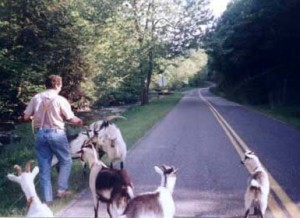 Henry Reed -- Pied Piper of Dreams -- walking goats down Fox Creek Road