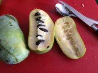 Pawpaw. Fruit with Pudding Inside. Yes.