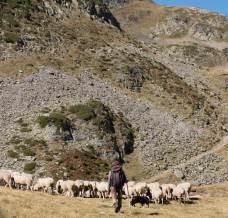 Shepherd with sheep in the hills