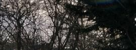 Sunburst through winter trees